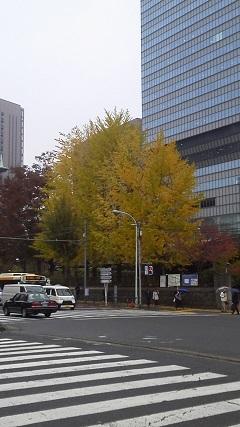 181122-DCIM0258tree-2.jpg